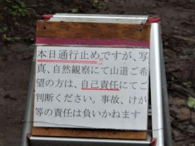 あじさい8.jpg